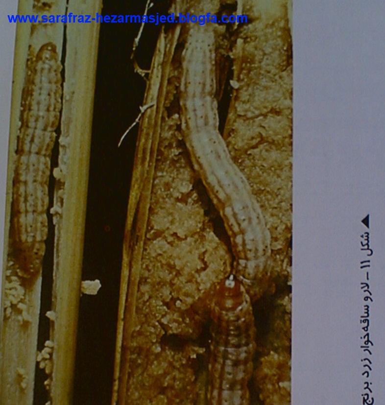www.sarafraz-hezarmasjed.blogfa.com