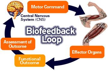 چرخه بیوفیدبک (Biofeedback)