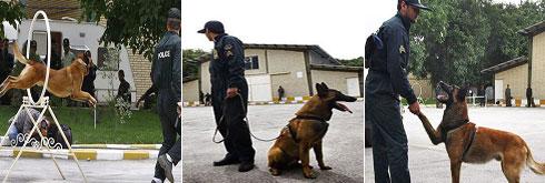 گزارش تصویری از مرکز آموزش سگهای موادیاب ناجا