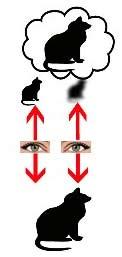 بینایی چشم آمبلیوپ