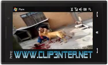 1094 کلیپ حمله وحشتناک سگ وحشی به یک نفر