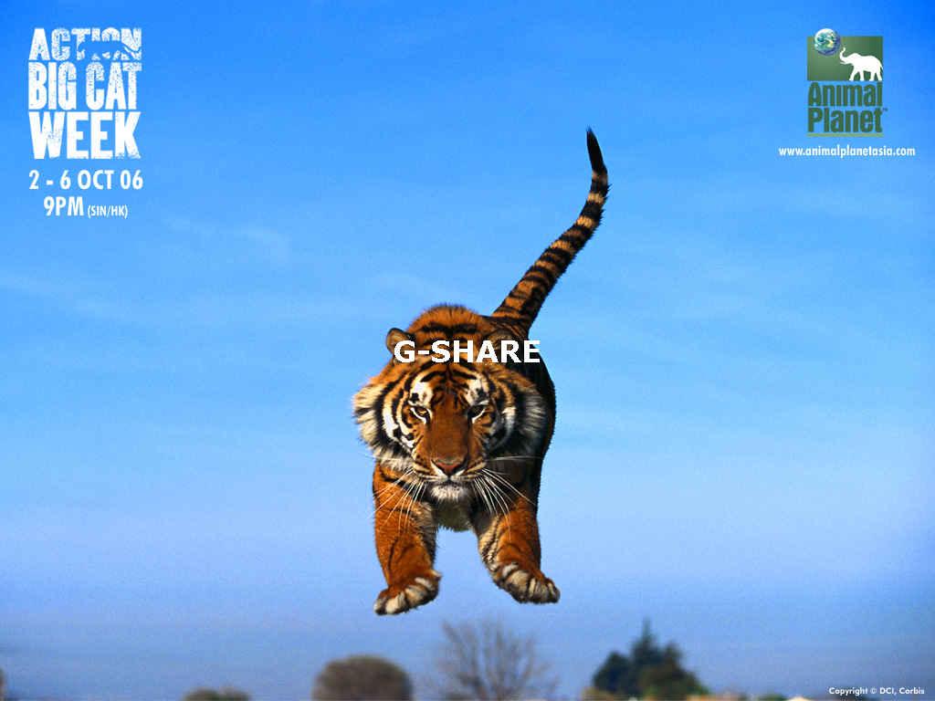 Animal Planet Tiger