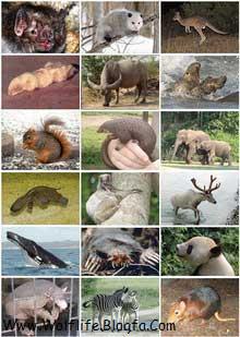 Mammal_Diversity_پستانداران