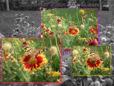 عکس + عکس پروانه + عکس طبیعت + گل