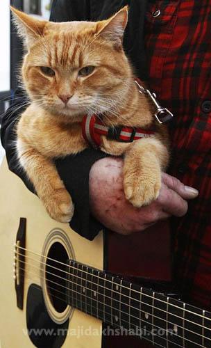 روايت مصور: یک مـرد و یک گربـه در خيابانـهای شهـر