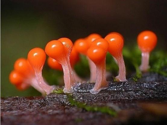هنر عکاسی: قارچهای زیبا