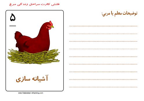 www.5dabestani.mihanblog.com مراحل زندگی مرغ فلش کارت