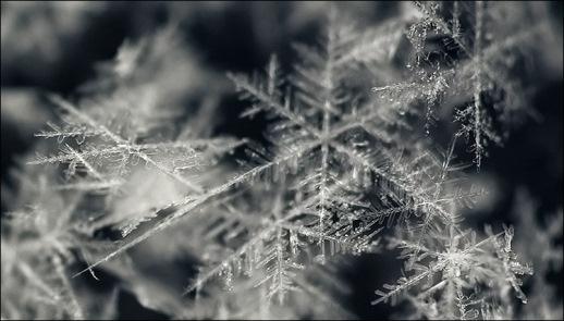 snowflakes - برف دانه