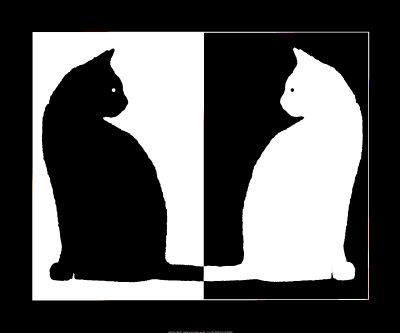black cat and white cat - گربه سیاه و گربه سفید