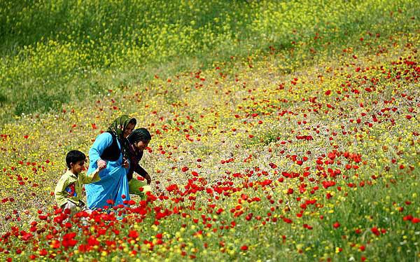 Image result for دشتستان
