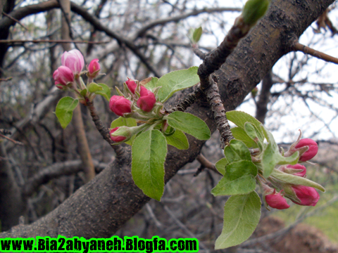 شکوفه ای زیبا بر درخت