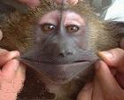 عکس های خنده دار حیوانات، تصاویر جالب و خنده دار بچه های حیوانات