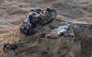کشف مجموعه عظیم فسیلی در انارک