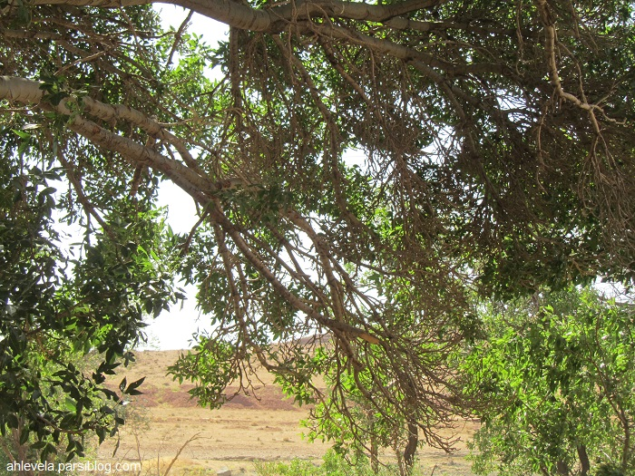 درخت، آشتیان