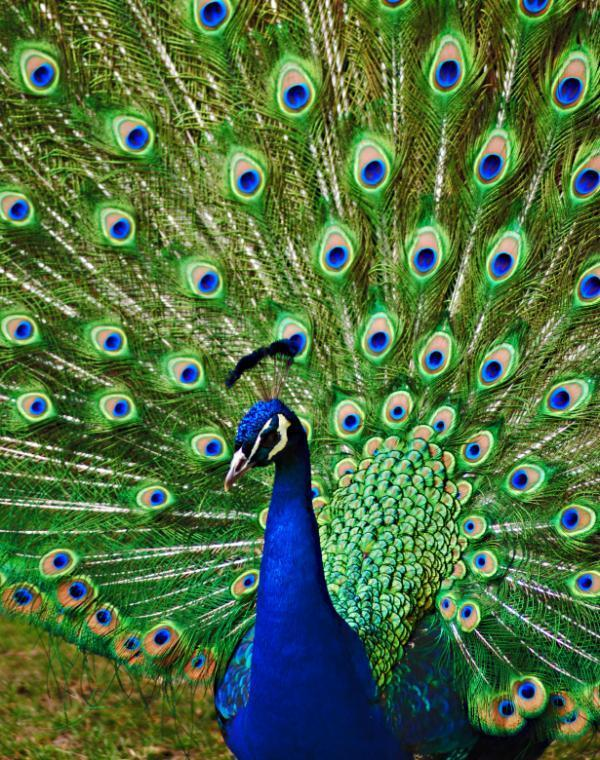 ترجمه-انگلیسی: دلفریب ترین پرندگان جهان