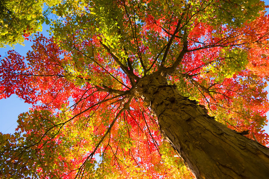 http://s1.picofile.com/file/7955442040/autumn_tree_17068457_by_stockproject1_d3aw9z9.jpg