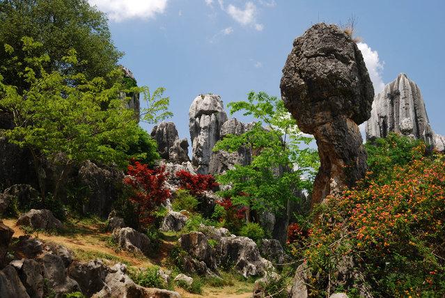 جنگل سنگ