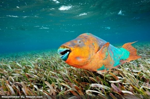 مطالب داغ: موجوداتی که به سادگی آب خوردن تغییر جنسیت می دهند