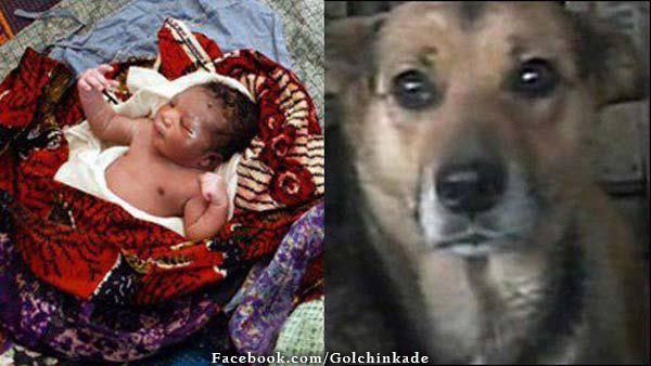 عکس سگ و بچه
