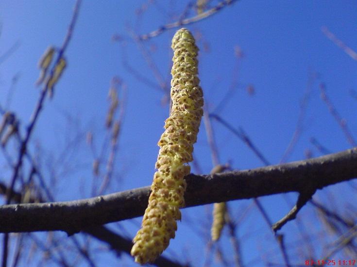 عکس از اوایل بهار در روستای شولم