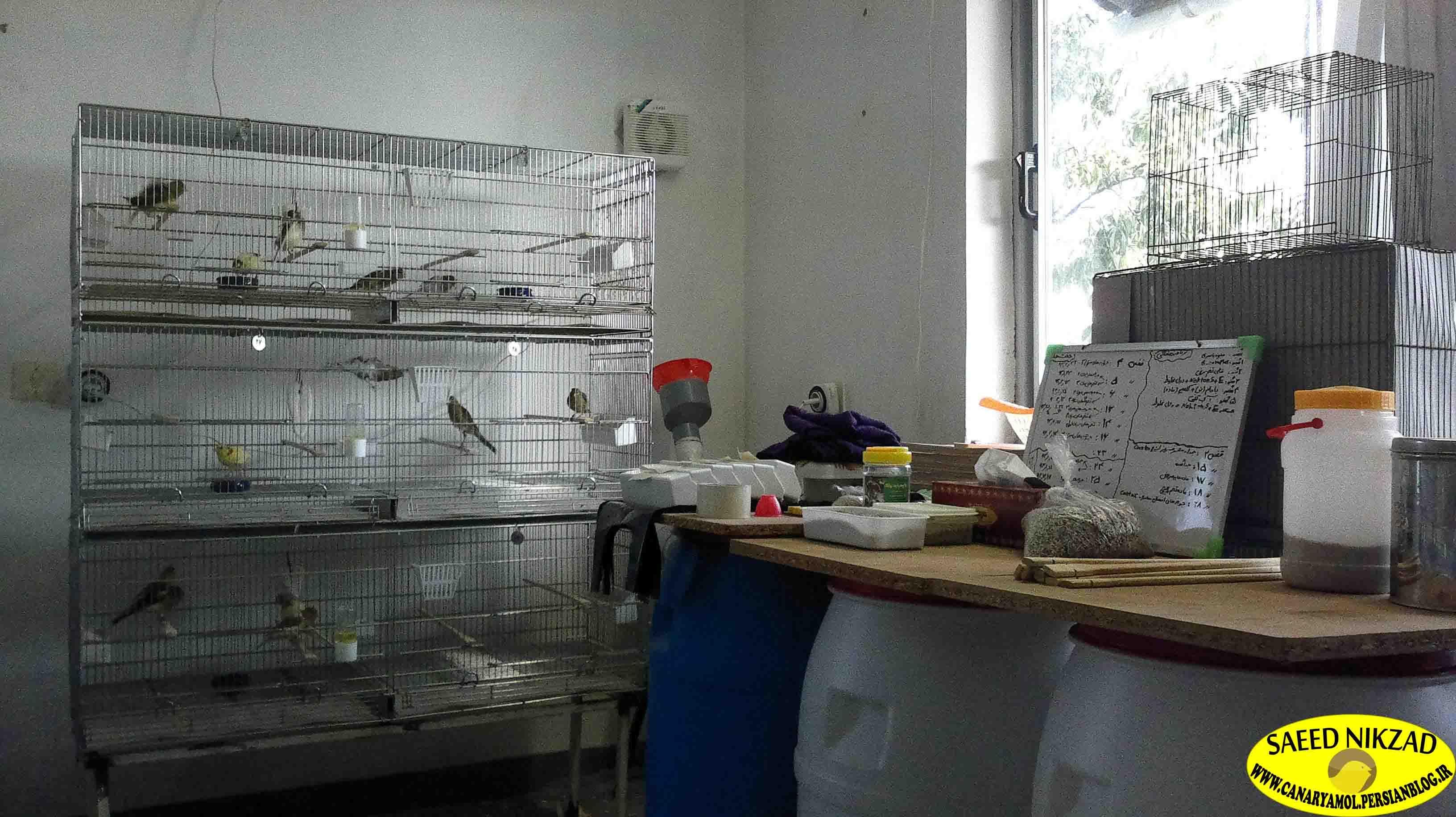 اتاق قناری ها متعلق به سعید نیک زاد