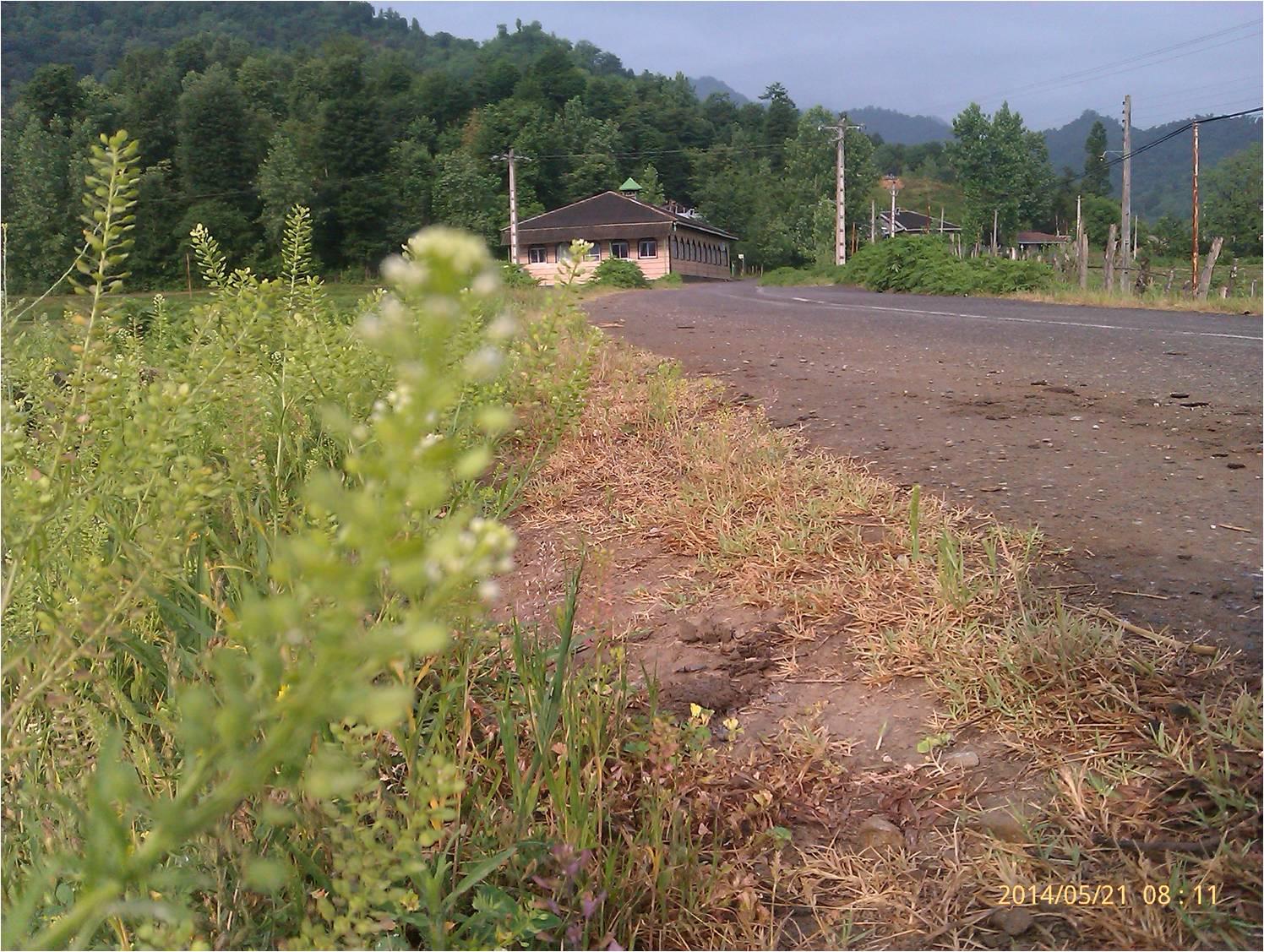 جاده بهاری روستای شولم