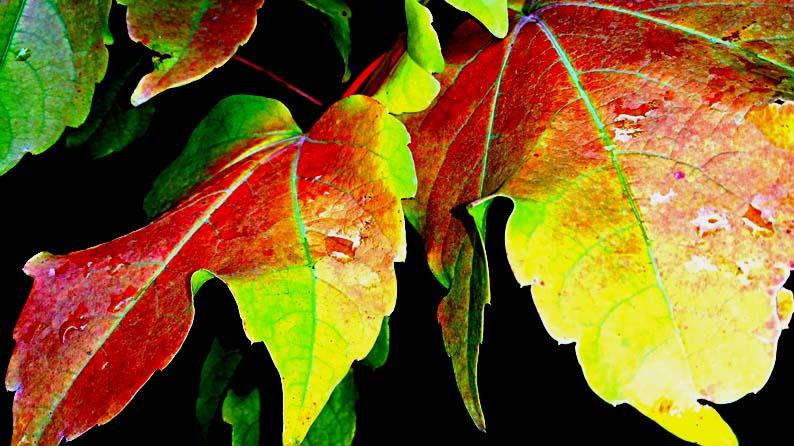 پاییز 94
