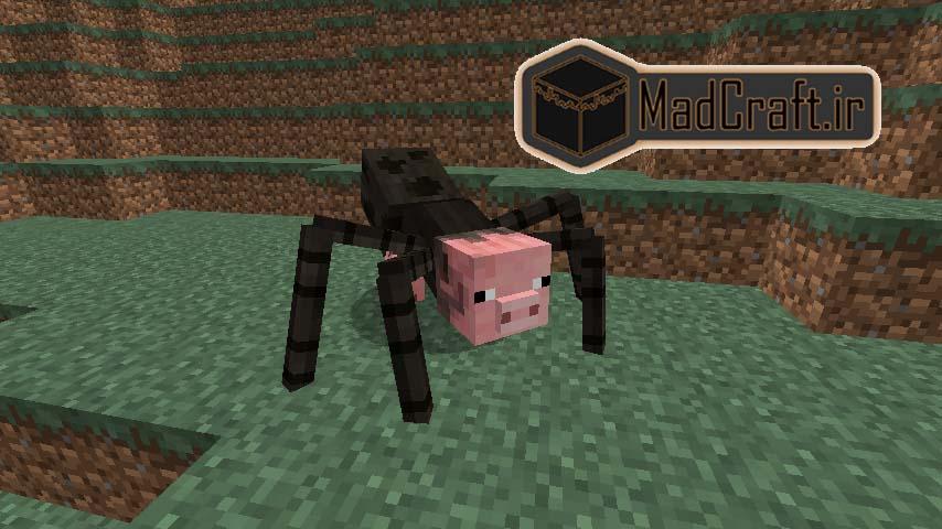 عنکبوت خوکی1