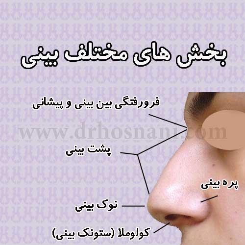 جراحی بینی دکتر حسنانی - اجزای تشکیل دهنده بینی