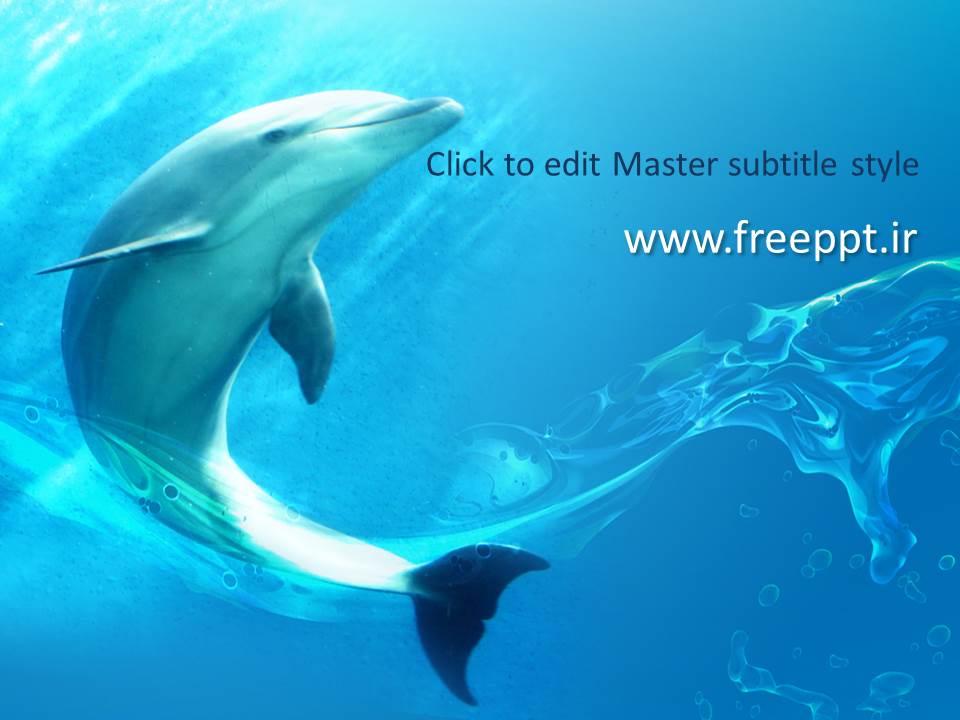 قالب آماده پاورپوینت دلفین