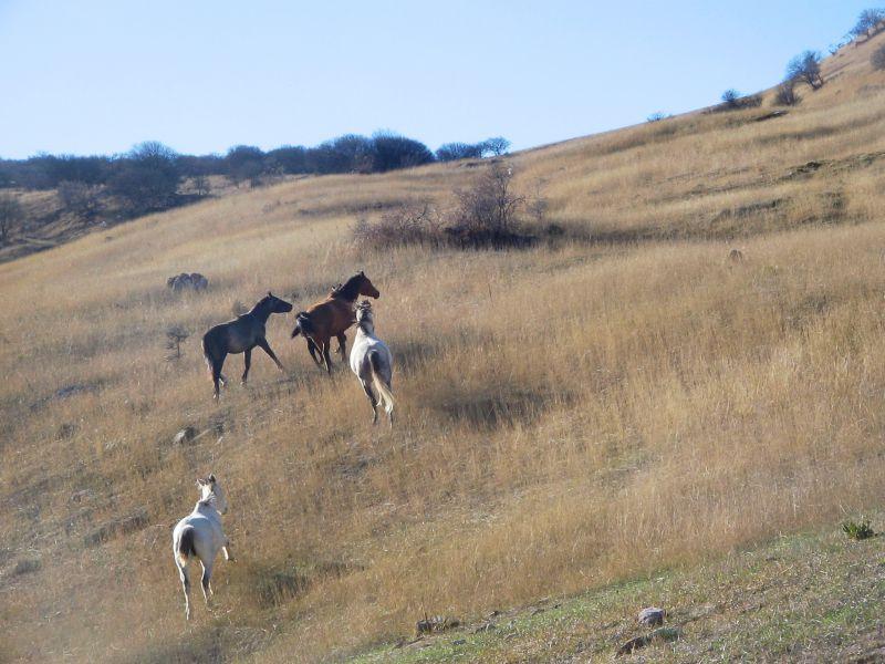 عکس اسب های وحشی روستای کاستان و کفترخانه مهمانک /عکاس خانم سرور کریمی