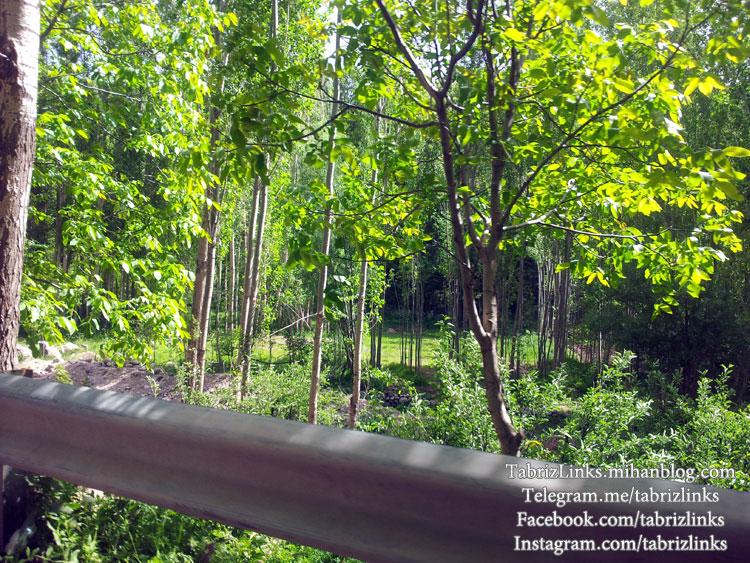 جنگل سهند