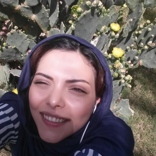 شقایق نوروزی