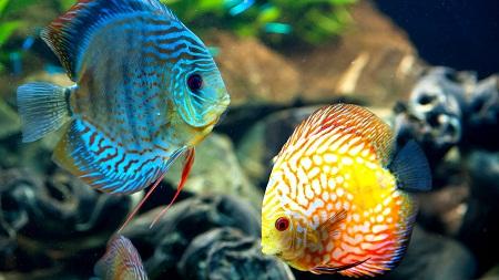 دانلود عکس ماهی با کیفیت بالا - HD