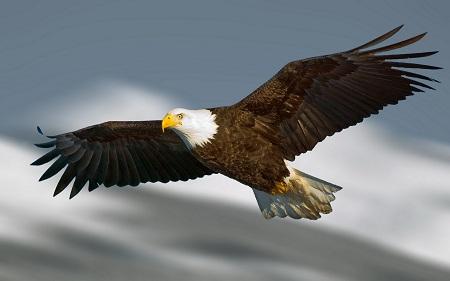 دانلود عکس عقاب با کیفیت بالا - HD