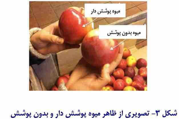 تصویری از میوه های پوشش دار و بدون پوشش
