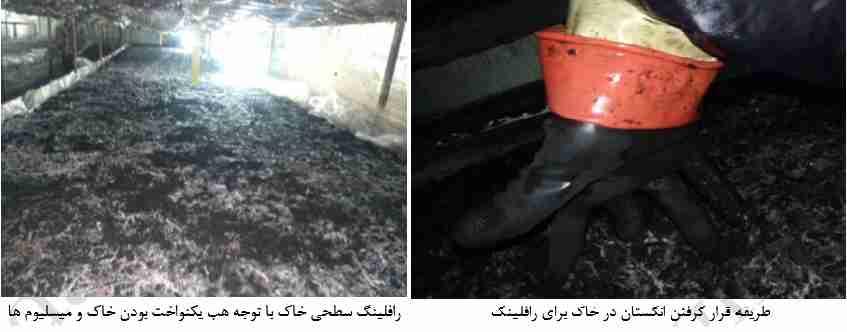 رافلینگ سطح خاک پوششی روی کمپوست