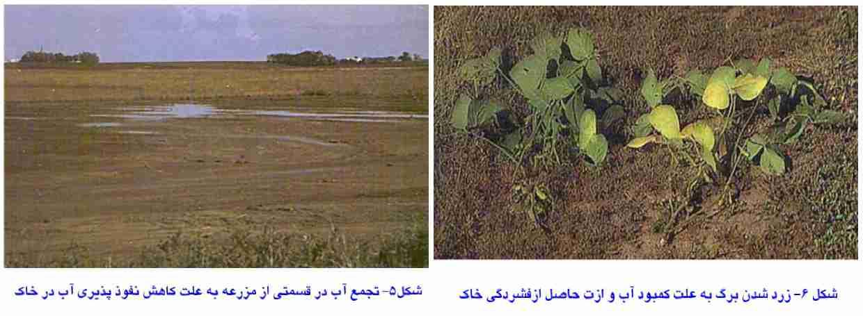 تجمع آب در قسمته فشرده شده خاک و زرد شدن برگ در اثر کمبود ازت و آب حاصل از فشردگی