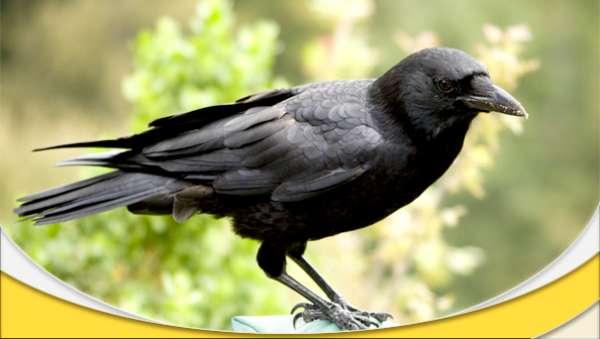 دانلود مستند هوش پرنده