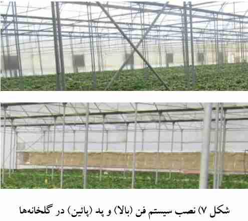 نصب سیستم فن و پد در گلخانه
