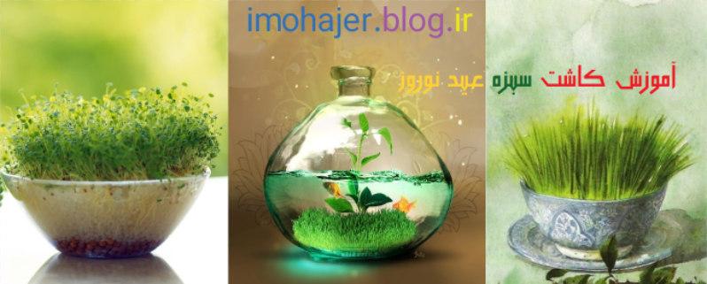 سبزه هفت سین , آموزش کاشت سبزه عید نوروز